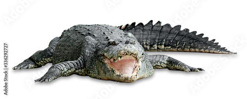 Foto old crocodile isolated on white background ,include clipping path
