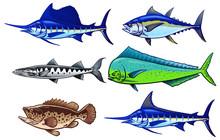 Set  Of Saltwater Game Fish