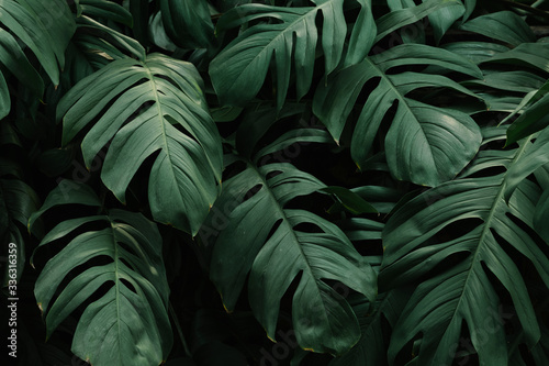 Papel de parede Tropical green leaves background