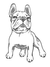 Proud-faced French Bulldog Sketch.  Vector Illustration. Image For Print On Any Surfaces