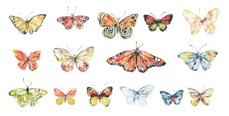 Butterfly watercolor illustration.Manual composition.Big Set watercolor elements.