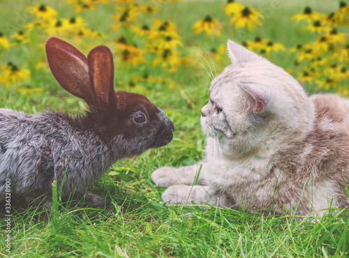 Fotografía White cat and brown rabbit sitting together on green grass in spring