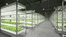 Indoor Hydroponic Vegetable Pl...