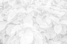 Vegetable White Background - W...