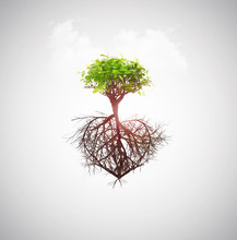 Tree Of Love Concept Roots Hea...