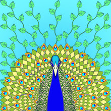 Peacock With Flowing Tail Colo...