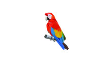 Low Poly Parrot Vector Illustration.