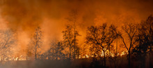 Rain Forest Fire Disaster Is B...