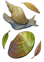 Swan Mussel And Great Pond Snail Illustration, Drawing, Colorful Doodle Vector