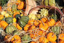 Pumpkins, Gourds, And Squashes