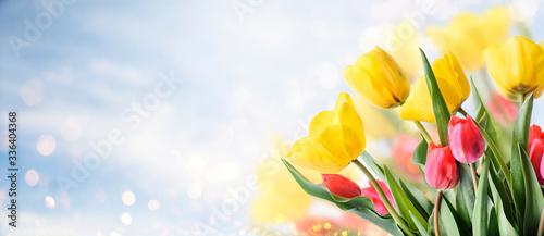 Closeup of tulip bouquet in garden with bokeh background Fototapet