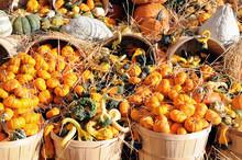 Decoration For Harvest Season
