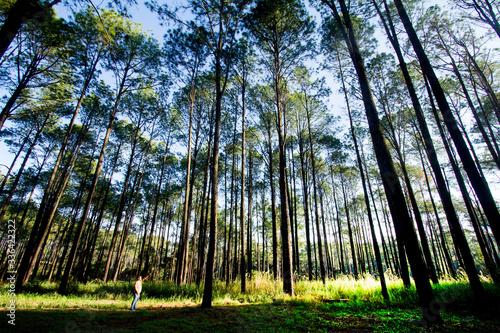 Thung Nang Phaya, Thung Luang Luang National Park,