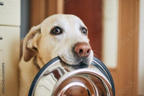 Dog waiting for feeding © Chalabala
