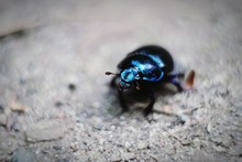 Close-up Of Blue Bug On Field
