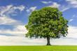 Leinwandbild Motiv single big oak tree in field with perfect treetop