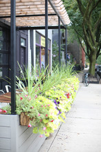 Chicago Lakeview Scene With Planters Sidewalk