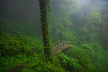Wooden Bridge In The Forest, D...