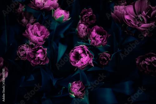 Obraz na plátně Flowerbeds of blossoming tulips