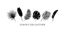 Set Of Palm Leaves. Exotic, Tropic Leaf Silhouettes. Botanical Black Design Elements.