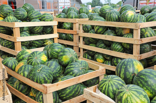 Fototapeta Crates of Watermelons obraz