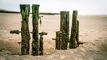 Old Pilings In A Tidal Flat