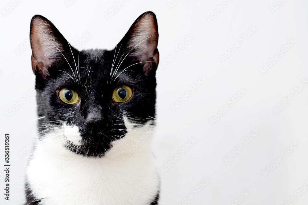 Fototapeta Retrato felino