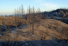 Scorched Landscape After A Fire In The Angeles Crest Mountains.