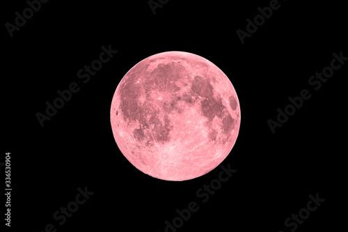 Fototapeta Pink full super moon on black sky background