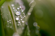 Macro Photography Of Blades Of...