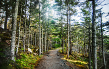 Trail Through The Forest Surrounding Otter Cliffs, Acadia National Park, Maine, United States, North America