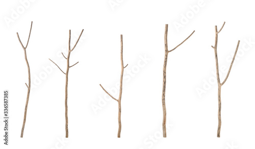 Piece of dry tree branch. Studio shoot isolated on white Fototapete