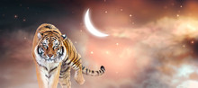 Fantasy Tiger Walking Forward On Fabulous Magical Night Sky Background With Glowing Crescent Moon, Shining Stars And Clouds, Fairy Tale Space Heaven, Fantastic Artistic Wide Panoramic Banner