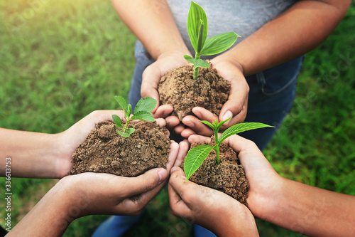 Fotografía three hand holding young Plant and standing group