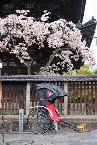 Fototapety, obrazy: 京都 八坂の塔と人力車と桜 桜