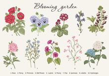Blooming  Garden. Vector Illustration.