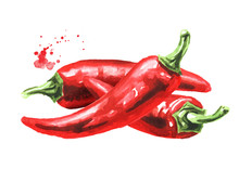 Red Hot Chili Pepper, Hand Drawn Watercolor Illustration  Isolated On White Background