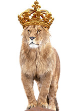 Lion King Stands Against Isolated On White Background