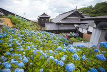 Landscape Of Beautiful Bloomin...