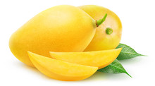 Isolated Yellow Mangoes. Two M...