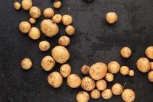 Junge Kleine Kartoffeln Welle ...