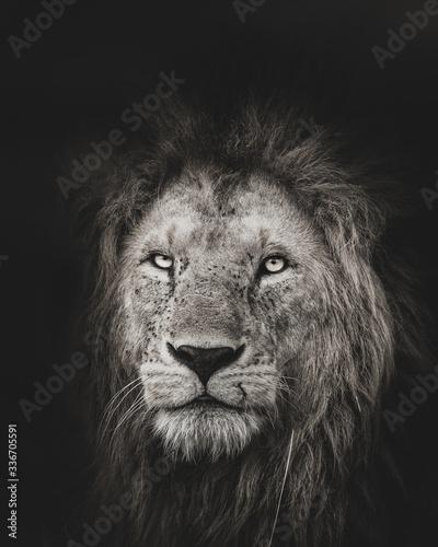 Fototapety, obrazy: Lion King