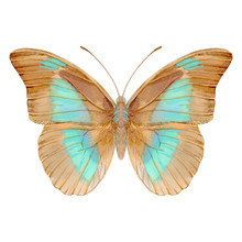 Hand Drawn Watercolor Of Realistic Butterfly Prepona Laertes. Stock Illustration Isolated On White Background.