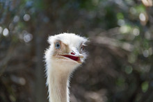 White Ostrich Head 2
