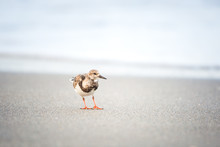 Shorebird On The Beach