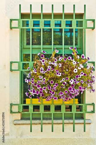 Front view, far distance of a iron bared window and window box with blooming flo Fototapeta