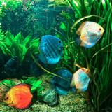 Fototapeta Do akwarium - Kolorowe rybki, akwarium, rafa koralowa