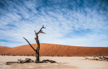 Dead Tree In Front Of Sand Dun...