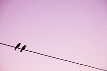 Two Black Birds On Wire With Pink Background
