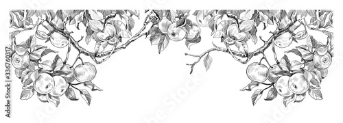 Fototapeta sketch of apple branches on a white background